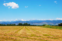Field with View of the Rocky Mountains Royalty Free Stock Images