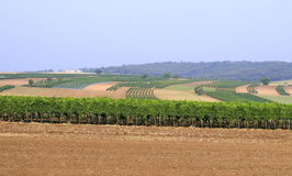 Field and vineyard Royalty Free Stock Photography