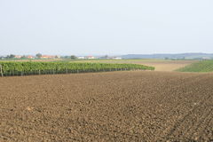 Field and vineyard Royalty Free Stock Photo