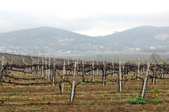 Field with a vineyard in the foreground Royalty Free Stock Images