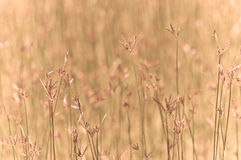 Field Vintage yellow grass Royalty Free Stock Images