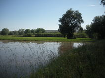 Field watered by flood irrigation Royalty Free Stock Images