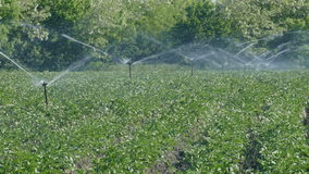 Field watering system, agricultural irrigation stock footage