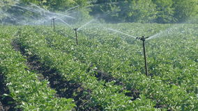 Field watering system, agricultural irrigation stock video footage