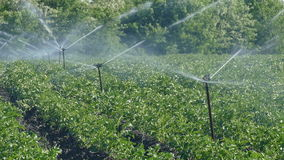 Field watering system, agricultural irrigation stock video