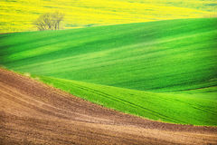 Field waves with tree, South Moravia Royalty Free Stock Photo