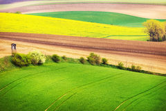 Field waves with trees, South Moravia Stock Photography