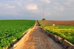 Field way. Stock Image