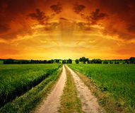 Field way. In the sunset Stock Images