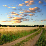 Field way Royalty Free Stock Photography