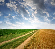 Field way. Sunset above the field way Royalty Free Stock Image