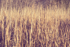 Field of tall grass and  weeds   Stock Images