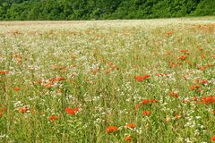 Field of Weeds Royalty Free Stock Photos