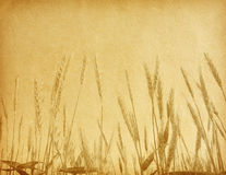 Field of wheat. Royalty Free Stock Photo