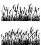 Field of wheat. On white. JPG include isolated path royalty free illustration