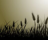 Field of wheat. Vector image of wheat field Stock Photography