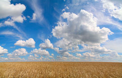 Field of wheat. And blue sky with clouds Stock Photography