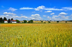 Field of wheat. Austria Stock Photography