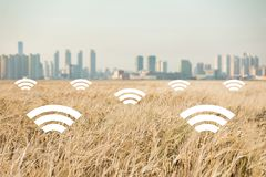 A field of wheat on the background of the modern city. Digital technologies in agriculture. Stock Photo