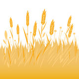 Field of wheat, barley or rye background. Vector Illustration of wheat or barley growing on a field Stock Photography