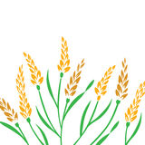 Field of Wheat. Barley or Rye  visual illustration,  on white background Royalty Free Stock Images