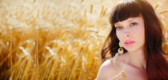 A field of wheat. Beautiful woman Stock Photos