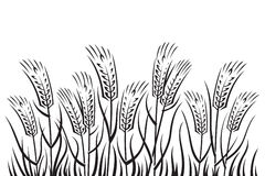 Field of wheat. Black on white background field of wheat Royalty Free Stock Photography