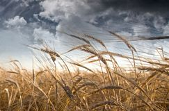 Field and Sky stock image