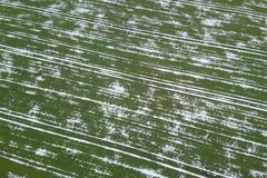 Field of wheat covered with snow. Spring Time Top View. Aerial View Stock Images