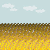 Field of wheat. Grain field and blue sky.  Rye Spikes Royalty Free Stock Photography