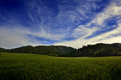 Field of Wheat Grain and Mountains Stock Photography