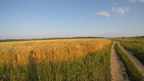 Field with wheat and ground road. Field with wheat, grass and ground road stock video footage