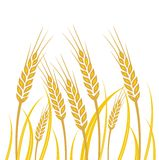 Field of Wheat - illustration. On white background Stock Photo
