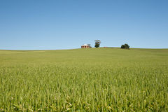 Field of wheat landscape Royalty Free Stock Photography