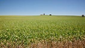 Field of wheat landscape Stock Image