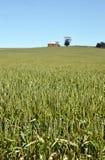 Field of wheat landscape Stock Photos