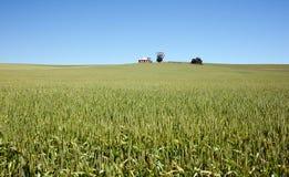 Field of wheat landscape Royalty Free Stock Photo