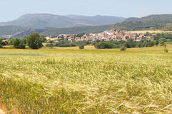 Field of wheat with picturesque village at background Royalty Free Stock Photo