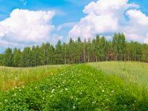 Field of wheat and potato Stock Photo