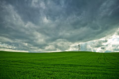 Field of wheat and storm clouds Royalty Free Stock Photography
