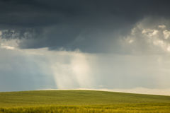 Field of wheat and stormy clouds Royalty Free Stock Image