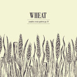 Field of Wheat vector seamless pattern. Vintage hand drawn illustration. Can be use for bread packaging, beer labels Stock Image