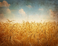Field of wheat. Vintage photo Royalty Free Stock Photography