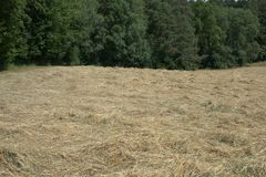Field where cut hay is laying in the sun to dry, with forest in the background. Field where fresh hay has been cut down and left to dry in the sun to be used for Royalty Free Stock Photography