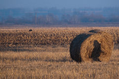 Field of whey and a bale of straws Stock Photo