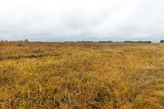 Yellowed grass, autumn Royalty Free Stock Images