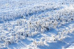 Snow covered field. The field on which the wheat harvest was harvested and on the sharp stems lie the snowballs. Crystals of ice are visible Royalty Free Stock Photos