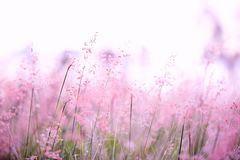 Field of Whispers Stock Photos