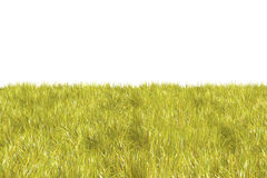 Field on white background. Fresh green grass on white background Royalty Free Stock Photo