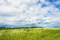 A field of white flowers against the cloudy sky. Stock Photography